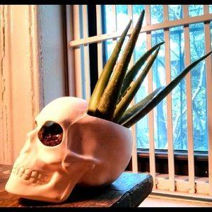 Other - Ceramic skull planter